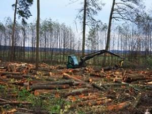 Продажа леса